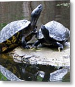 Turtles Sunning And Holding Hands Metal Print