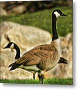 Two Geese Metal Print