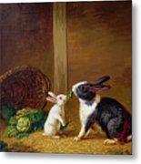 Two Rabbits Metal Print by H Baert