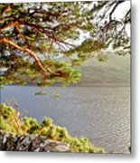 Warmth  Of The Pine Branch. Metal Print