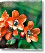 Wildflowers 5 -  Polemonium Reptans  - Digital Paint 3 Metal Print