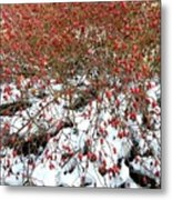 Winter Harvest 2 Metal Print