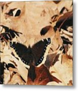 #002 Nymphalis Antiopa, Mourning Cloak Camberwell Beauty Large Butterfly Anglewing Metal Print