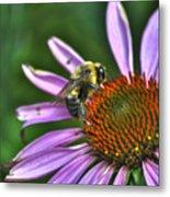 02 Bee And Echinacea Metal Print