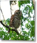 0298-001 - Barred Owl Metal Print