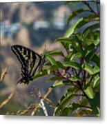 0518- Butterfly Metal Print