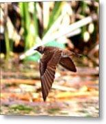 0518 - Northern Rough-winged Swallow Metal Print