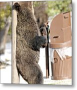 060510-grizzly Back Scratch Metal Print