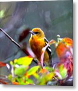 0651 - Baltimore Oriole Metal Print