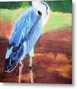 08282016 Female Blue Heron Metal Print