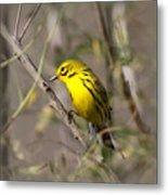 0839 -yellow Warbler Metal Print