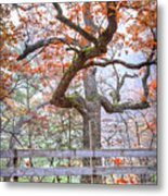0981 Fall Colors At Starved Rock State Park Metal Print