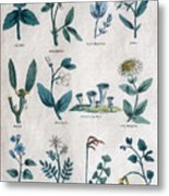 Lithography Of Common Flowers  Metal Print