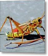 15- Lubber Grasshopper Metal Print
