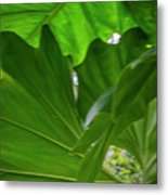 4327 - Leaves Metal Print