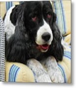 #940 D1031 Farmer Browns Springer Spaniel Metal Print