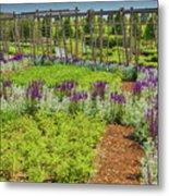A Corridor Of Purple Sage Flowers And Stachys Lanata Sunlit Metal Print
