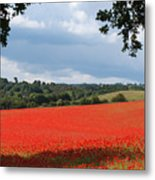 A Field Of Red Poppies Metal Print