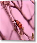A Ladybug   Metal Print