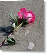 A Rose For Julie Metal Print