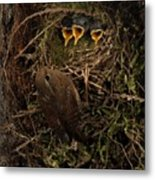 A Visit To The Nest Metal Print