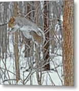Acrobat Of The Forest Metal Print