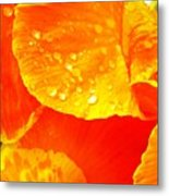 After The Rain ... Metal Print