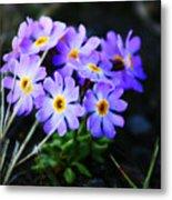 Alaskan Wild Flowers Metal Print