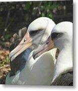 Albatross Lovers Metal Print