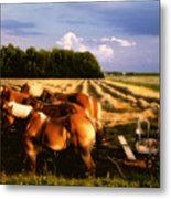 Amish Hay Rig Metal Print