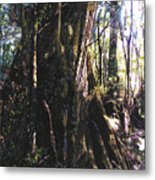 Ancient Pandanii Cradle Mountain Gondwana Rainforest Metal Print