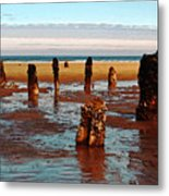 Ancient Trees At Neskowin Beach Metal Print