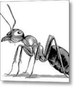 Ant Metal Print