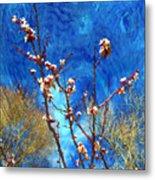 Apricot Blossoms El Valle Metal Print