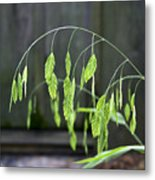 Arching Grass Metal Print
