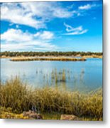 Arizona Riparian Preserve  #4 Metal Print