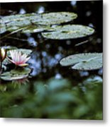At Claude Monet's Water Garden 6 Metal Print
