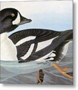 Audubon Duck Metal Print