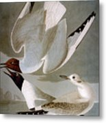 Audubon: Gull Metal Print