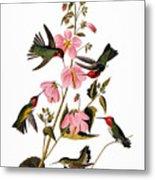 Audubon: Hummingbird Metal Print