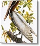 Audubon: Pelican Metal Print