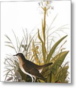 Audubon: Thrush Metal Print