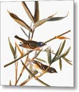 Audubon: Vireo Metal Print