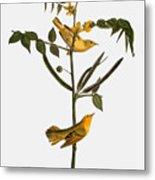 Audubon: Warbler, 1827-38 Metal Print
