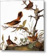 Audubon: Wren Metal Print