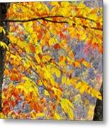 Autumn Beech Leaves Metal Print
