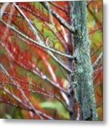 Autumn Colors 25 Metal Print