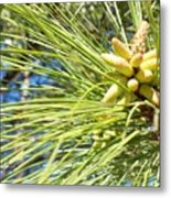 Baby Pine Cone Metal Print