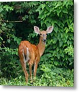 Backyard Deer Metal Print