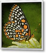 Baltimore Checkerspot Metal Print